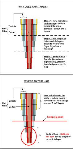 Why Trimming Your Natural Hair is Important. Good to know, since I've been trimming my own...