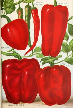 Peppers taken from  Seed Annual (1921). D.M. Ferry & Co. Detroit, Mich.