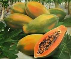 Papaya seeds are the part of the fruit most people throw out without a second thought. Amazingly, papaya seeds are not only consumable but are Fruit Seeds, Tomato Seeds, Orchid Seeds, Flower Seeds, Banana Seeds, Papaya Tree, Vegetable Planters, Chlorophytum, Plantas Bonsai