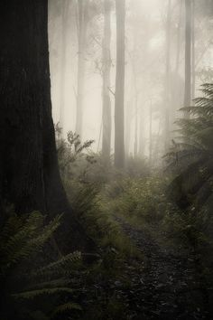Fog Art Print featuring the photograph From Darkness by Amy Weiss Misty Forest, Dark Forest, Foggy Forest, Magical Forest, Nature Aesthetic, Mists, Nature Photography, Photography Tips, Photography Courses