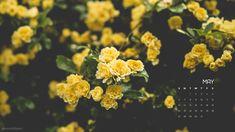 20 ideas wallpaper desktop wallpapers arbonne for 2019 Accent Wallpaper, Wall Wallpaper, Wallpaper Backgrounds, Desktop Wallpapers, Desktop Calendar, Calendar Wallpaper, 2019 Calendar, Avas Flowers, Wild Flowers