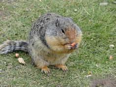 best pick ever from an chipmunk :))
