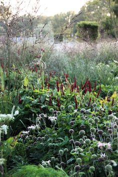 Molinia 'Transparent' (pijpenstrootje) is een ijl hoog gras dat zoals de naam al zegt heel transparant is.