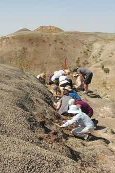 What a 66-million-year-old forest fire reveals about the last days of the dinosaurs.  Remains of an ancient forest fire preserved in stone.  Caption: A McGill field crew is collecting fossils as part of a field course in Grasslands National.  Credit: Hans Larsson/Emily Bamforth