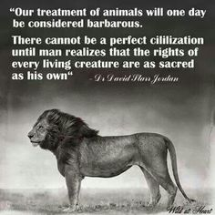 Animal Rights Quotes Pinmarisol Davila On Wildlife Let's Protect It  Pinterest