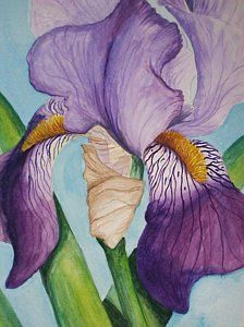 Irises Painting - Royal Beauty by Brad Hook