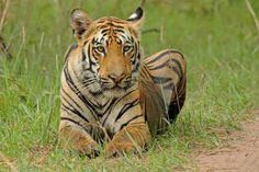 Two highways have cut six wildlife corridors in region - The Times of India