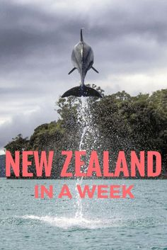 Do you only have a week in New Zealand? See the best of the country with this itinerary - including dolphins, hiking, volcanoes, and fjords!