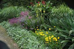 Perennial Border - Alowyn Gardens
