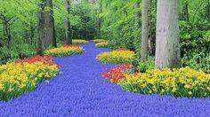 Greenies: the stunning forest carpet at Keukenhof, Netherlands.