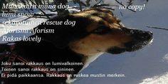 Husky, Dogs, Movies, Movie Posters, Animals, Art, Art Background, Animales, Films