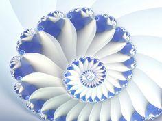 Google Afbeeldingen resultaat voor http://www.abm-enterprises.net/fractal-art/blue-nautilus-wallpaper.jpg
