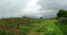 Lucca, Wineries, Monte Carlo, 3, Nikon, Vineyard, Italy, Outdoor, Outdoors
