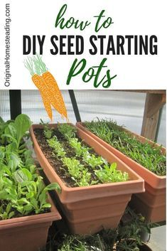 Here are 10 ideas on how to make DIY seed starting pots at home with things you probably already have!!! Reduce, Reuse, Recycle and Repurpose....... Happy Growing Season!!
