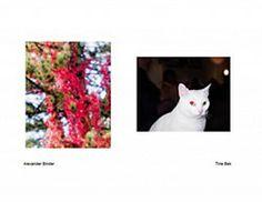 Images by Alexander Binder and Tine Bek from Blog Reblog