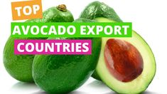 TOP AVOCADO EXPORTERS Horticulture, Avocado, Training, Fruit, Tops, Lawyer, Garden Planning, Work Outs, Excercise