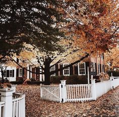 I will forever wish to live in a place that has the colors of autumn and white picket fences Hello Autumn, Autumn Day, Autumn Leaves, Photo Trop Belle, Beautiful Homes, Beautiful Places, Autumn Aesthetic, Seasons Of The Year, Autumn Inspiration