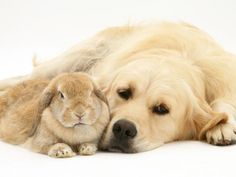 Rabbit & Golden <3