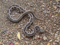Hingolgadh Nature Education Sanctuary - in Gujarat, India