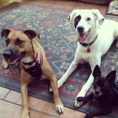 Nala, Patch and Millie