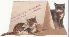 Legel Druggist Charles City Iowa Kittens Cats Cutout Victorian Card c 1880s #LegelDruggist. Helena Maguire.