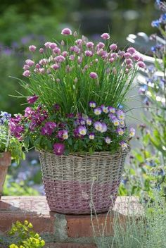 Allium schoenoprasum, Viola cornuta