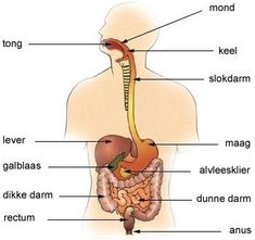 This 10 day unit covers the Digestive System of the human body. This can be used in Anatomy/Physiology class and can also be used in Biology.
