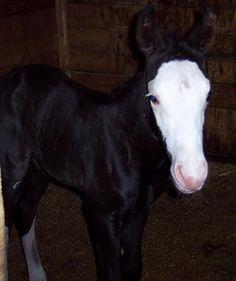 Horse  - unusual markings