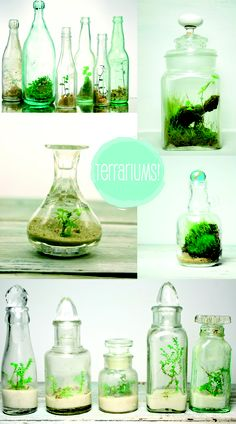 terrrrrrrrariums! I dont know why I think this is so cool...but I definitely need to try this!