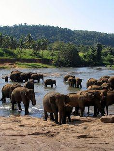 Pinnawela Elephant Orphanage in Sri Lanka by PseudoRandom, via Flickr