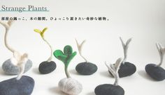 strange plants-芽オブジェ-by ヒツジフエルト縮絨室-ヒロタリョウコ[strange plants by Felt Fulling Lab-Ryoko Hirota]