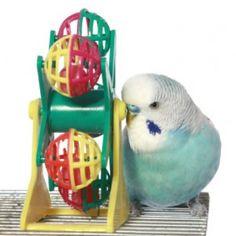 Top Toys For Parakeets - Lafeber Cares - Pet Bird Food