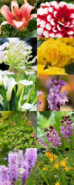 Thinking of doing bulbs instead of annuals this year Bulb Flowers, May Flowers, Summer Flowers, Pretty Flowers, Garden Bulbs, Planting Bulbs, Planting Flowers, Flower Gardening, Backyard Plants