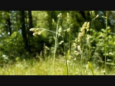 Tim Janis - Beautiful America - YouTube