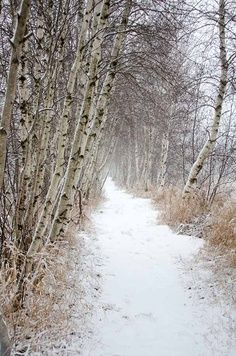 the peace of a walk in the snow . . . um, when properly dressed! beautiful path