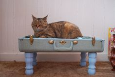 I've seen suitcase cat beds on Etsy for years now, and I've always wanted one…