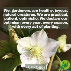 Grow Banana Tree, Plants Quotes, Victory Garden, Gardening Quotes, Garden Signs, Flower Quotes, Flower Farm, Shade Garden, Optimism