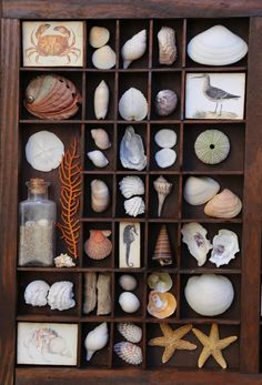 Seashell Display, Seashell Art, Seashell Crafts, Beach Crafts, Starfish, Seashells, Beach Shadow Boxes, Shadow Box Art, Seashell Shadow Boxes