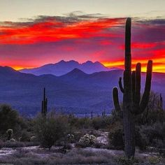 This extraordinary sunset occurs in the Sonoran Desert. The iconic Saguaro Cactus grows only in that desert that is located in the US state of Arizona & the mexican state of Sonora. Desert Dream, Desert Sunset, Grand Canyon Sunset, Best Photographers, Beautiful Sunset, Belle Photo, Amazing Nature, New Mexico, Beautiful Landscapes