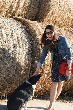 Hay bales and pup.