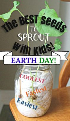 These are the best seeds to sprout with kids! A perfect science experiment for Earth Day. Find out which seeds sprout the fastest, which have the coolest cell structure to watch, and which are the easiest seeds to grow for kids. #howweelearn #earthday #earthday2019 #seeds #spring #kidsactivities #springactivities #getoutside #scienceexperiments