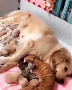 No dog & cat fight here! No dog & cat fight here! Happy Animals, Cute Funny Animals, Cute Baby Animals, Animals And Pets, Cute Cats, Adorable Dogs, Cute Animal Pictures, All Pictures, Pet Birds