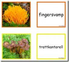 image Educational Activities For Kids, Outdoor Activities, Learn Swedish, Swedish Language, Fall Preschool, Nature Study, Teacher Hacks, Science And Nature, Pre School