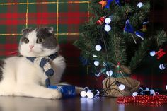 12 Cats Dressed Up For A Very Meowy Christmas & A Happy Fur Year