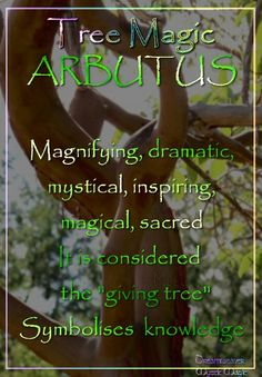 °ARBUTUS ~ Magnifying, dramatic, exciting, mystical, inspiring, magical, sacred. It is considered the 'giving tree' Symbolises  knowledge