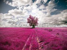 oniric landscape and tree - 31846584