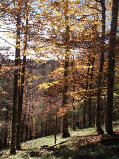 Autumn in Montaña Navarra: The forests are spectacular, it's time to … – Mirua Actividades Naturaleza Navarra y Pirineos – Join in the world of pin Country Roads, Autumn, Landscape, World, Plants, Beautiful, Fall Landscape, Scenery, Pyrenees
