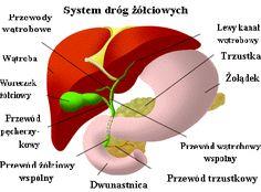 pancreatic-liver Source by Naturopathy, Girl Short Hair, Medicinal Herbs, Kraut, Kombucha, Diabetes, Detox, Herbalism, Healthy Living