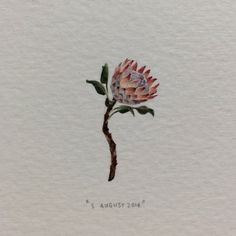 Day 227 : The king protea (Protea Cynaroides) is the national flower of South Africa. 17 x 29 mm. #365postcardsforants #wdc624 #miniature #watercolour #kingprotea #protea #fynbos #flower #capetown (for @livyfox, from Mark ♥️)  (at Schoone Oordt Country House)