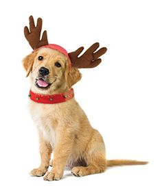 6ce8ffa3f73 KOVOT Holiday Dog Reindeer Costume - Reindeer Antlers Hat   Bell Collar -  Small Medium
